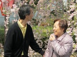 H26.4.10造幣局通り抜け (22).JPG