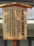 H26.4.10造幣局通り抜け (36).JPG